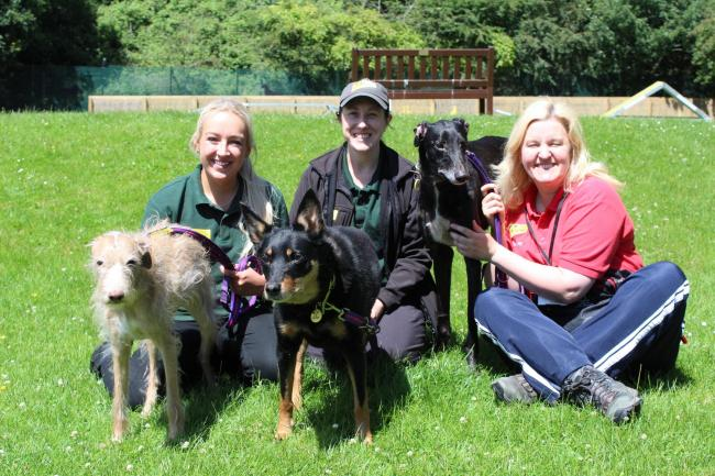 (Left to right)Yargo with Canine Carer Freya McVey, Canine Carer Nicola Eaton with Kika and volunteer Alison Rutter with Quin