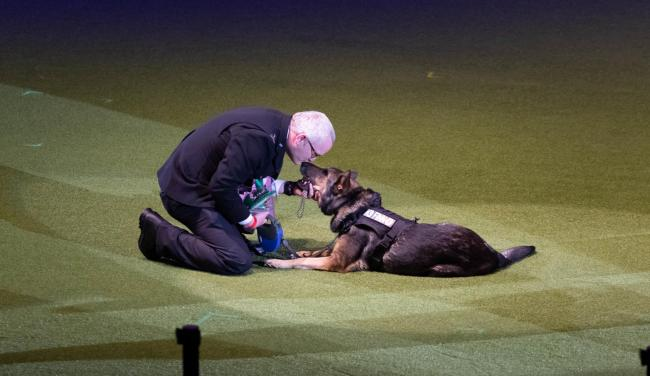 Dave and Finn winners of Friends for Life 2019 (Picture: Beat Media and the Kennel Club)