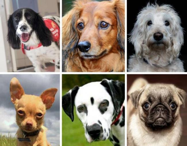 Revealed The Most Expensive Puppies In The Uk Full List Runcorn And Widnes World