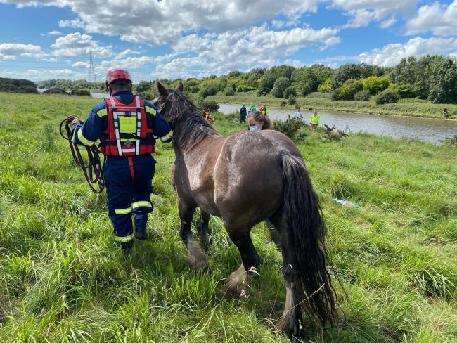 The horse being rescued from Manchester Ship Canal