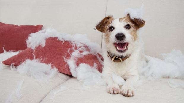 Runcorn and Widnes World: Consider repurposing old pillows for pets (but only if they won't tear them up!). Credit: Getty Images / smrm1977