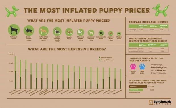 Runcorn and Widnes World: The most inflated puppy prices. (Benchmark Kennels)