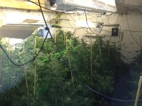 Cannabis found at a house in Widnes