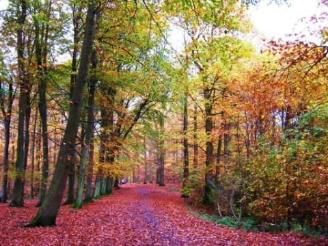 This autumn scene was captured by World reader, Beryl McWhan