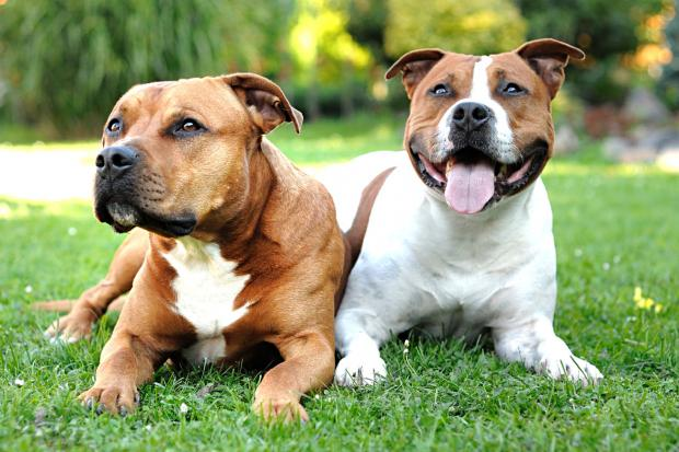 Dog owners urged to be more responsible