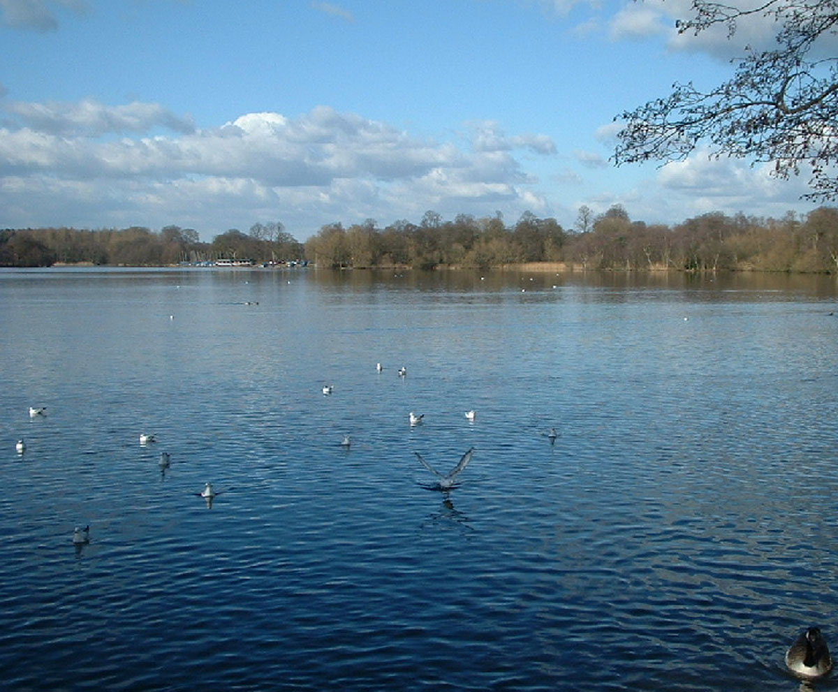 Enjoy watching the birdlife on Redesmere.