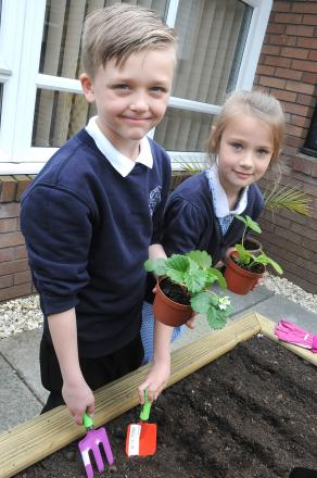 Matthew Stead, aged eight, and Ellie Thompson, aged nine, from Murdishaw West school plant strawberries
