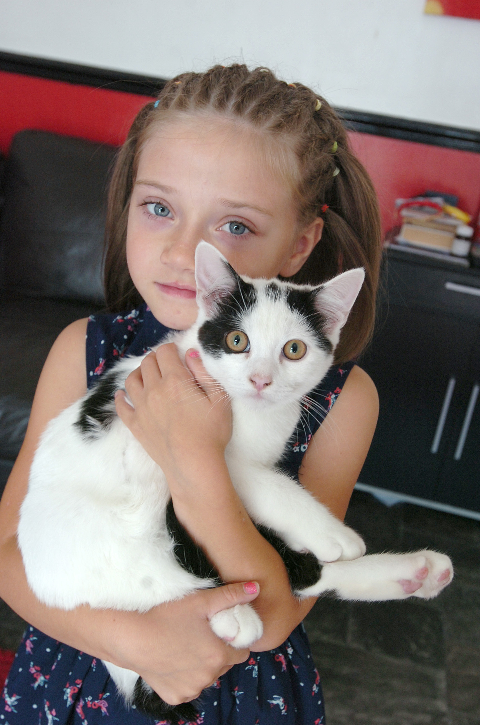 Children left heartbroken after pet cats are poisoned with antifreeze
