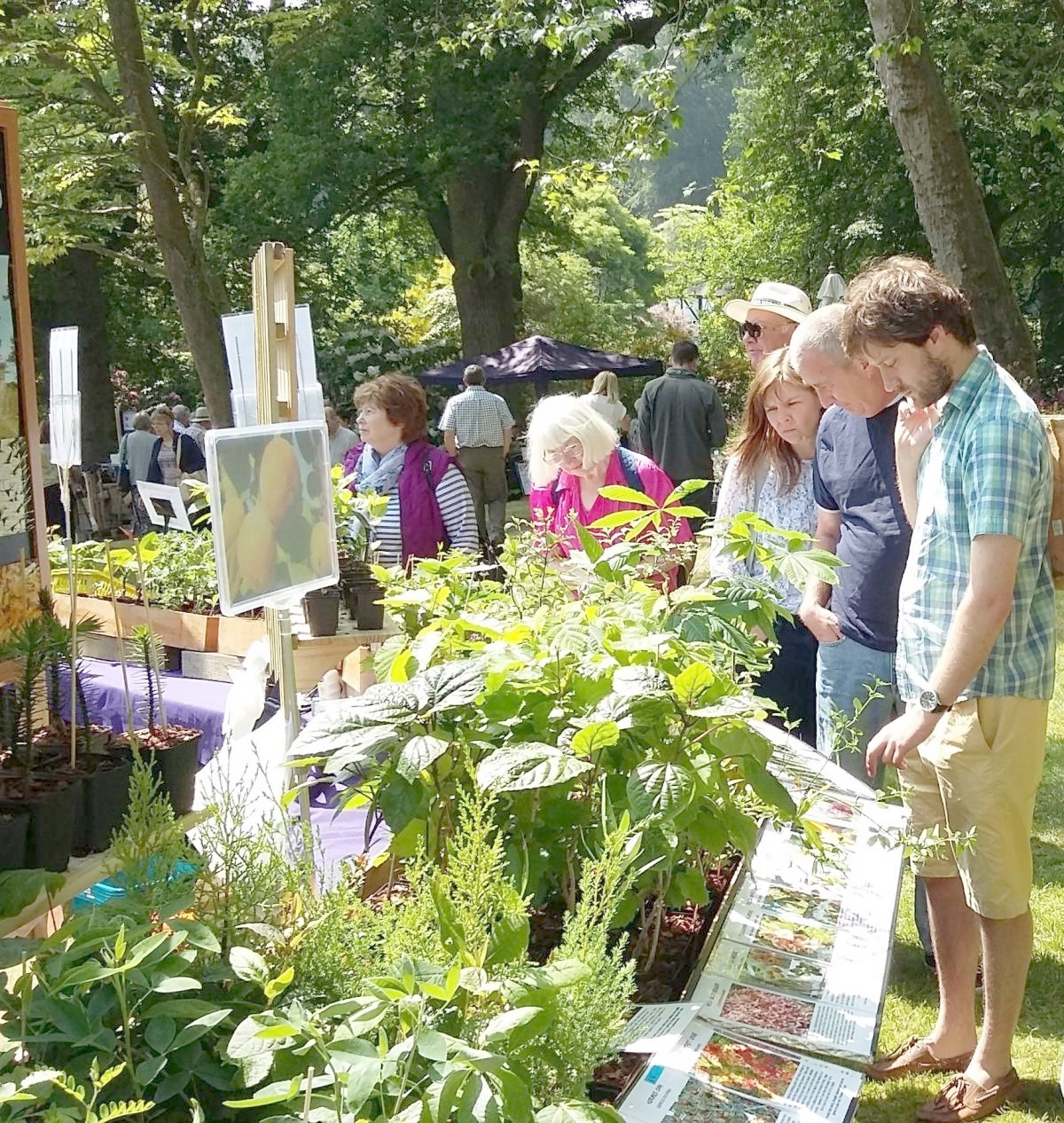 Chance to spruce up your garden as a plant hunter's fair is being held in the walled garden of Norton Priory today