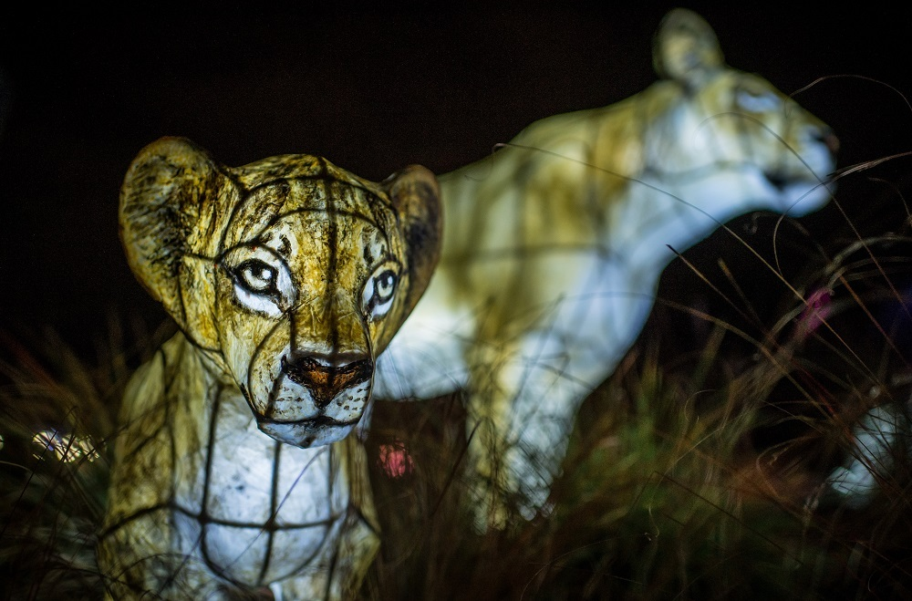 Lanterns at Chester Zoo