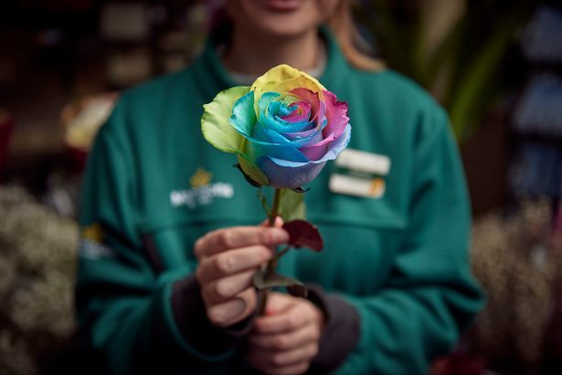 Morrisons will be selling the rainbow rose this Valentine's Day